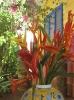 Karibik 2007_19